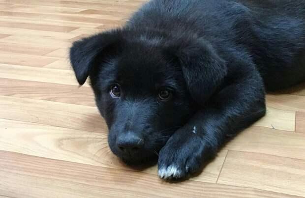 Собака. Фото: открытый источник