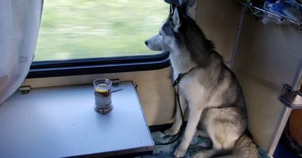 В России животным разрешили ездить в поездах без хозяев