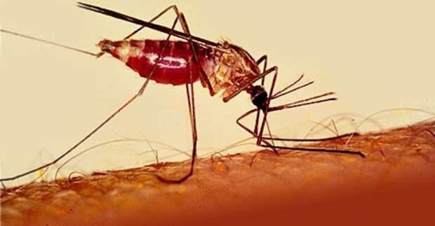 5 наиболее опасных заболеваний, которыми можно заразиться во время путешествий