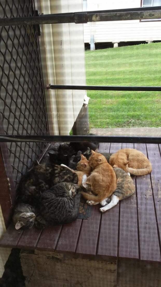 Пришли всей семьей на крыльцо, и не собираются покидать его встреча, гости, дружба, животные, коты, кошки, неожиданно, фото