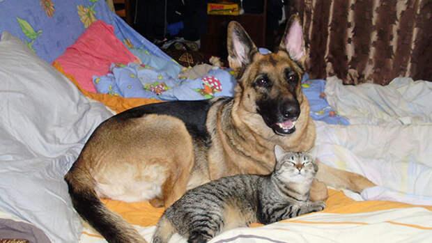 Верните кошке — собаку! И прежнюю жизнь...(Часть 1)