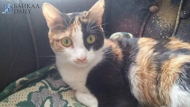 Умершая улан-удэнка оставила в наследство 81 кошку