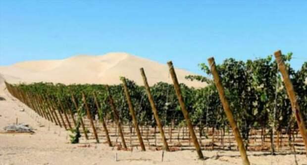 Не все знают, что в этих странах делают неплохое вино