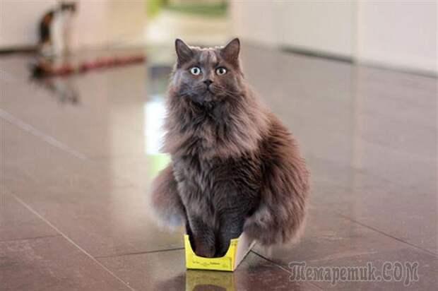 Железная кошачья логика