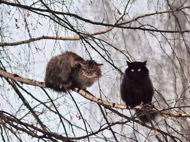 Кошки — любители деревьев