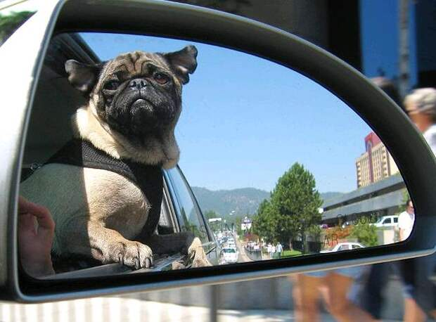 http://www.vh1.com/celebrity/bwe/images/2011/04/Dogs-In-Car-Windows-35-RESIZE.jpg