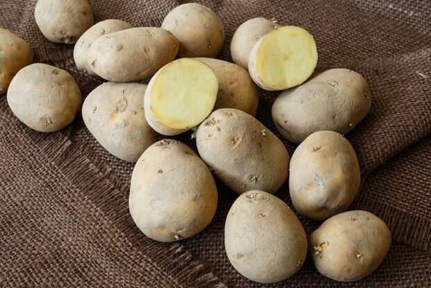А вы умеете резать картофель для посадки?