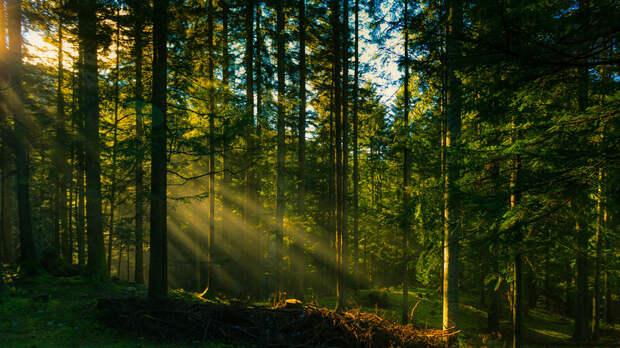 Лес не панацея: почему посадка деревьев не спасет планету от глобального потепления