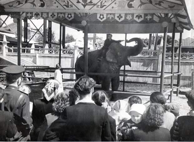 Уголок Дурова в 1953 году