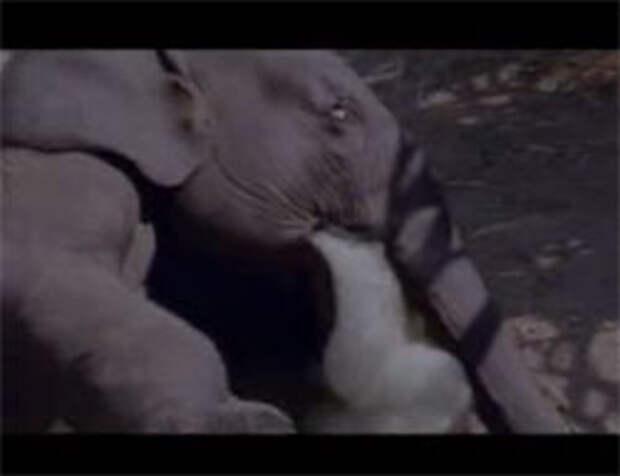 Wangkanai Sugar: довольны, как слоны