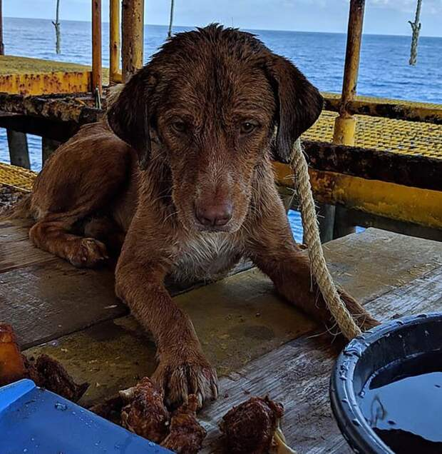 В Таиланде спасли собаку, которая была обнаружена посреди Сиамского залива в 217 километрах от берега