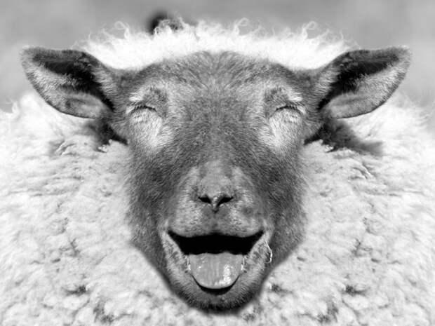 30 позитивных зверюшек, которые точно поднимут тебе настроение