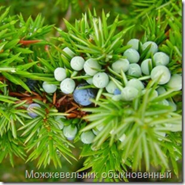 Одежка для земли — почвопокровные растения