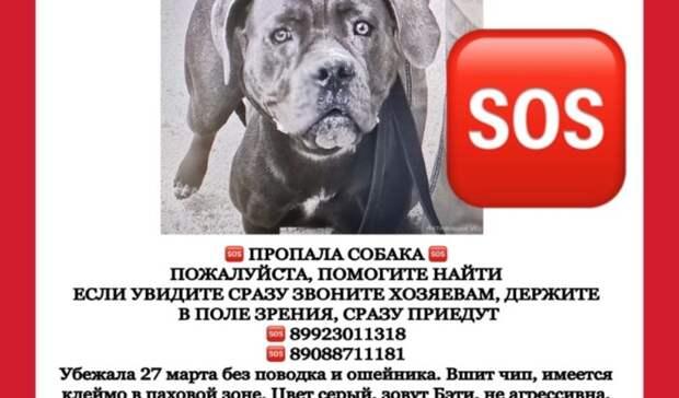 Больше двух недель вТюмени разыскивают двух потерявшихся собак