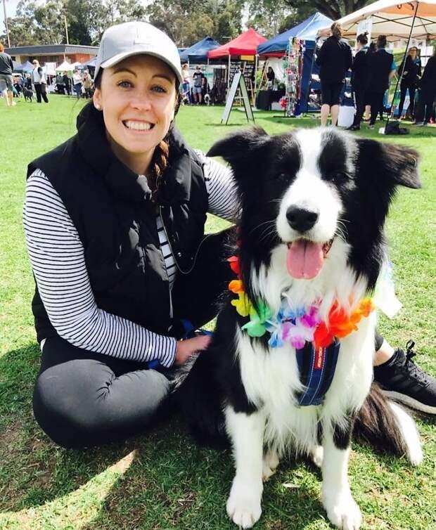 В 2013 году мероприятие организовывала ветеринар Катрин Уоррен, тогда было подсчитано 503 колли Порода, австралия, бордер-колли, животные, мероприятие, рекорд, собака