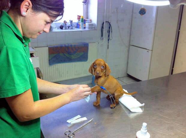 Отважный маленький пациент ветеринары, животные