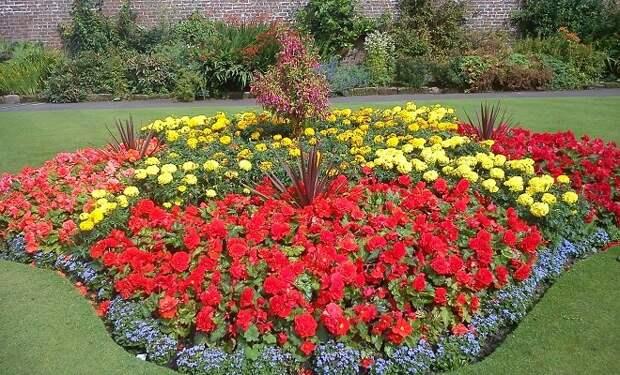 15 однолетников с красными цветками – яркие краски в вашем саду