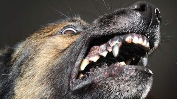 В Америке появились полицейские собаки с железными зубами
