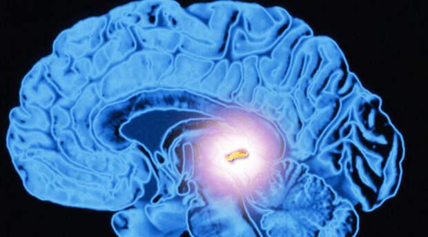Органы нашего тела, о предназначении которых многие не знают