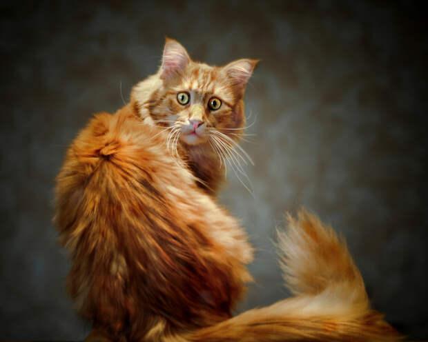 ОЗПП: Кот ни в чем не виноват