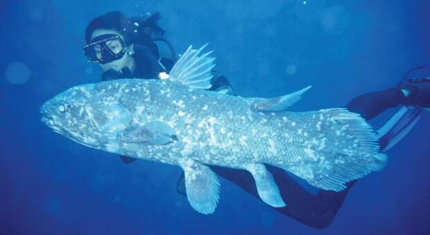 prichudlivieribi 7 10 самых причудливых рыб мирового океана