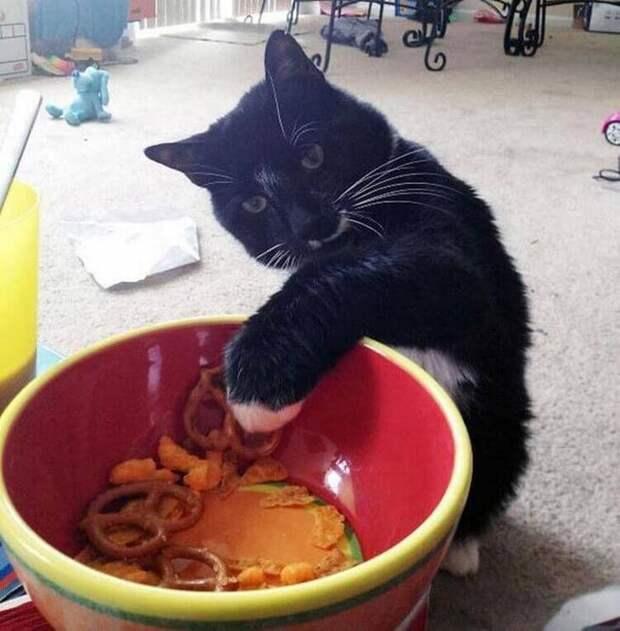Голод не тётка: 15 попавшихся с поличным котов