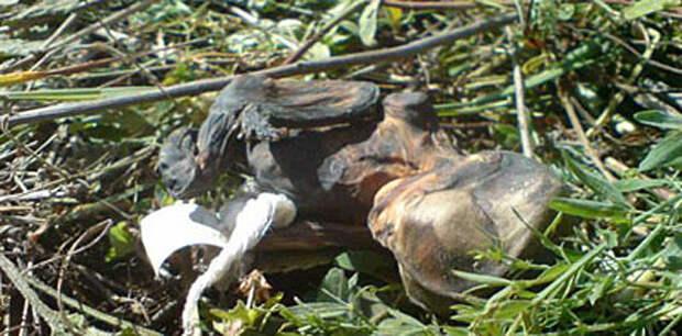 Уральские грибники обнаружили в лесу 50 человеческих эмбрионов