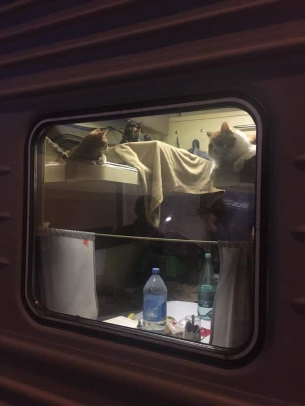 10 фото четвероногих попутчиков в железнодорожных вагонах