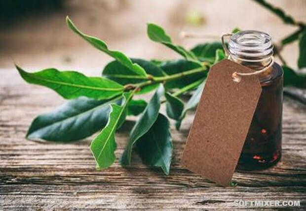 10 самых необычных растительных масел
