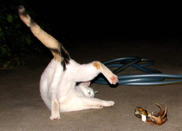 1.  кот, поза