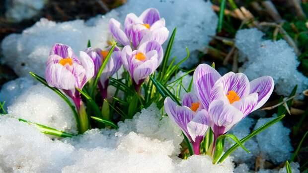 Встречайте Весну. Март .