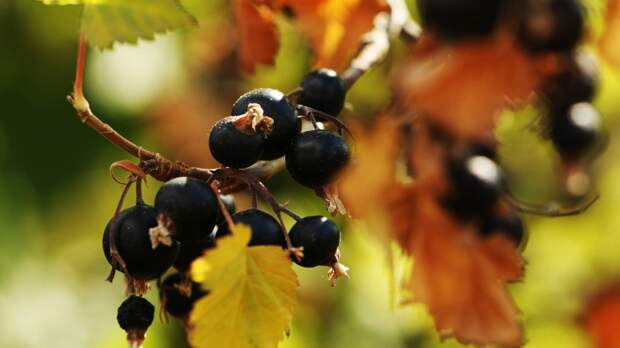 Садовод Володихин рассказал о способах получения большого урожая ягод