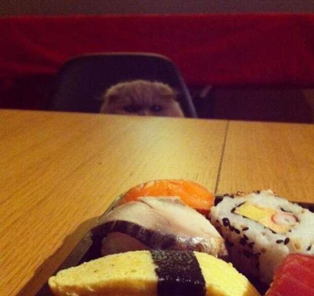 Я просто присмотрю вкусно, еда, животные