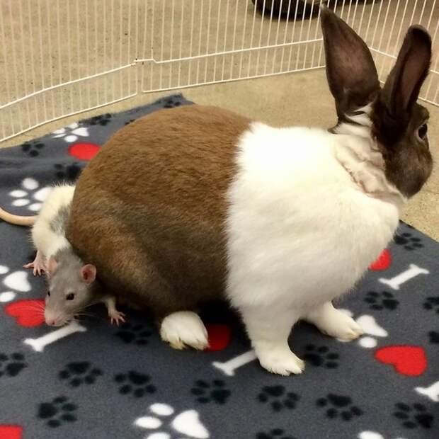 Крыса и кролик настоящие друзья
