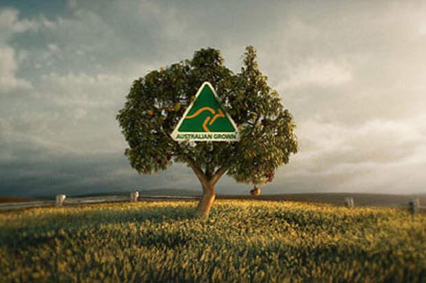В Австралии коровы растут на деревьях!