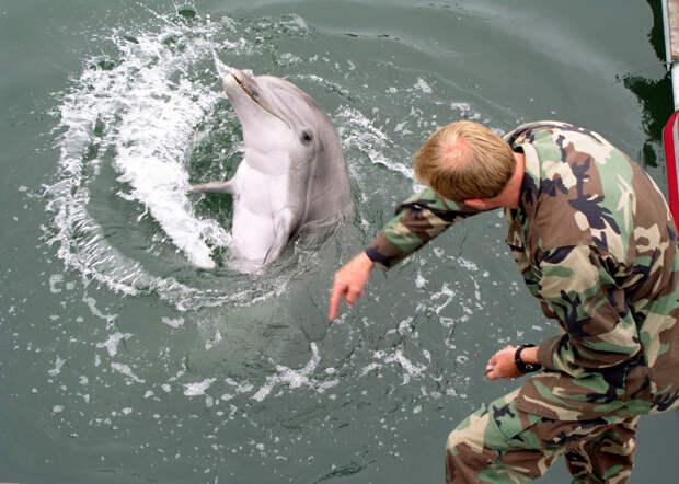 6. Млекопитающие в ВМФ. Боевые животные, животные, история