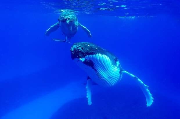 Киты и дельфины в фотографиях Кристофера Суонна