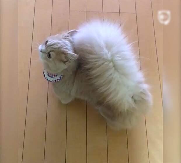 Очаровательная кошка с беличьим хвостом