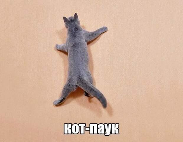 Милые и смешные кошки