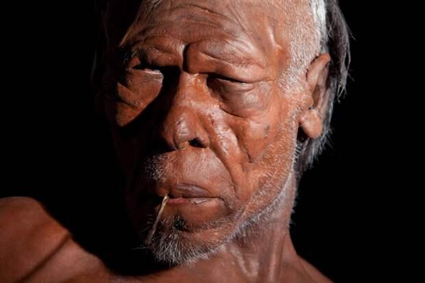 Homo Sapien model 1 (c) Trustees of NHM.jpg