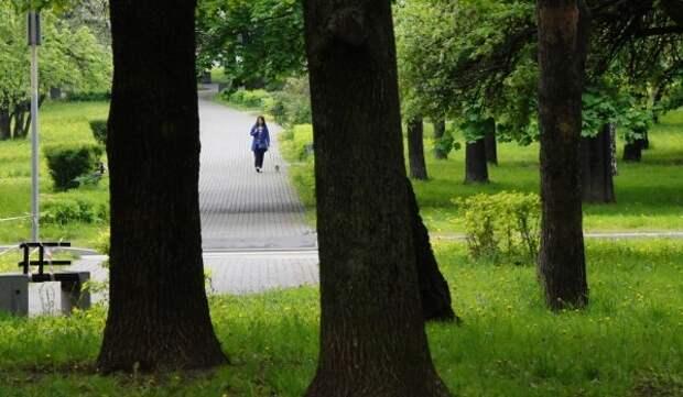 В парках столицы до конца осени высадят более 8,5 тысяч именных деревьев