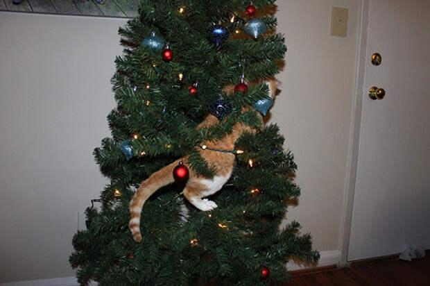 28. Миссия начинается елка, кошка, подборка