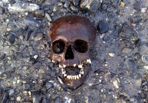 Невероятные археологические находки, извлеченные из мусора