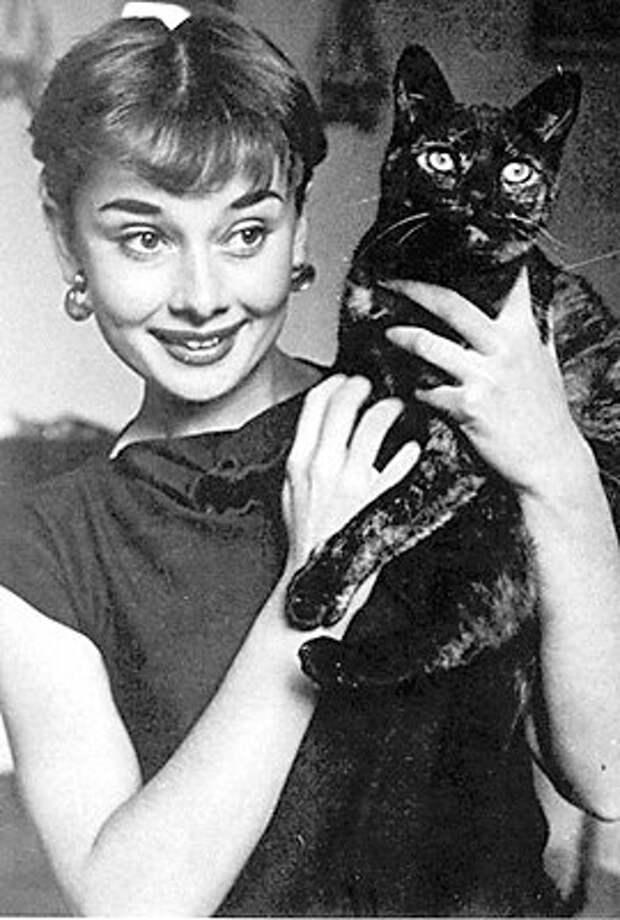 Одри Хепберн и животные: кошка. Фото / Audrey Hepburn and animals: cat. Photo