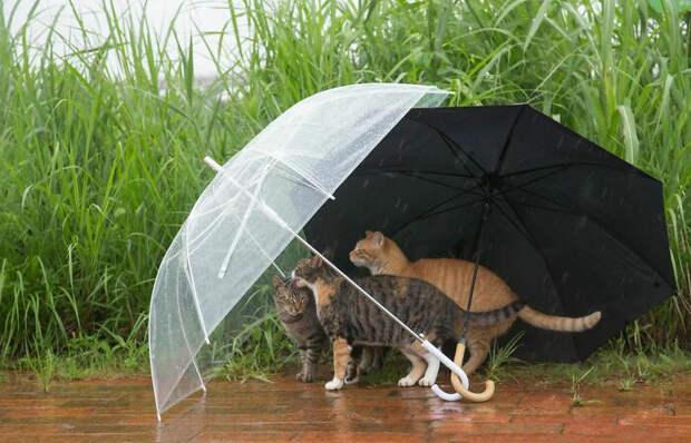 Бездомные коты со всего мира на уличных фотографиях японского фотографа