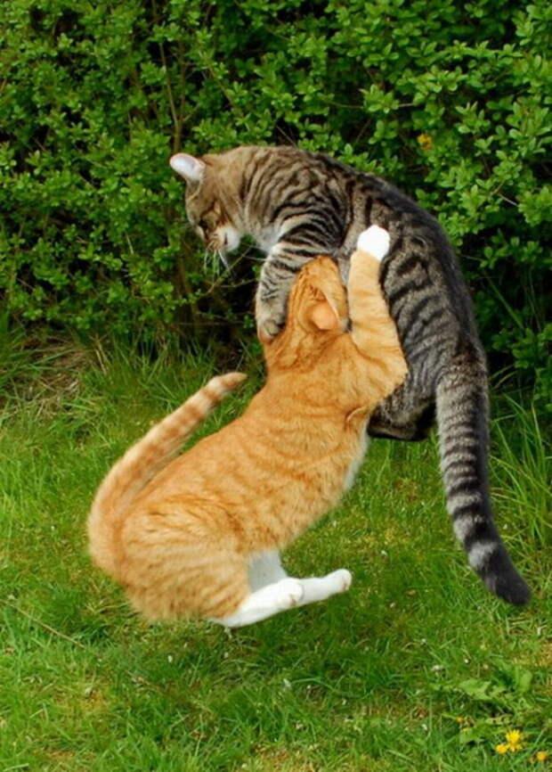 Коты-ниндзи или кошкины забавы?