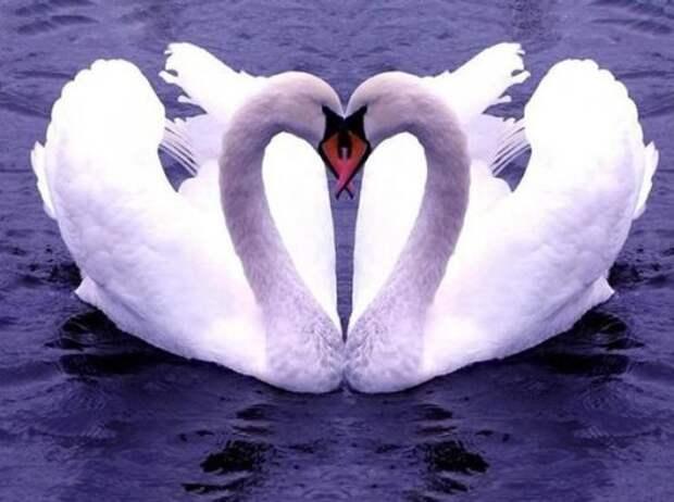 Такая вот животная любовь - позитивная фотоподборка