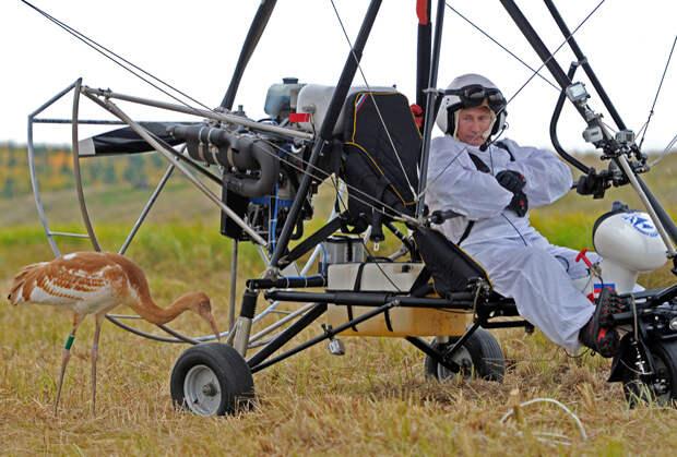В 2012 году Путин принял участие в эксперименте по спасению стерхов — редкого вида журавля, занесенного в Красную книгу