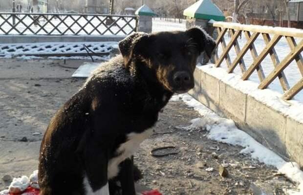 Хатико из Павлодара погибает голодной смертью в ожидании своего хозяина