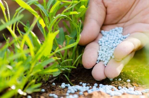 Пермские ученые создали удобрение для повышения урожайности